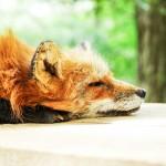 Expertise – der Dr. Fox Effekt