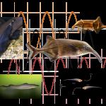Telepathische Jäger und elektrische Fische aus den Borderlands